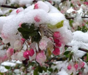 April snow boven1