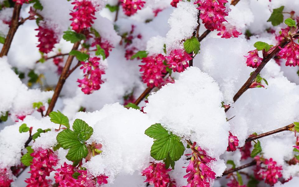 April Snow 600 x 960
